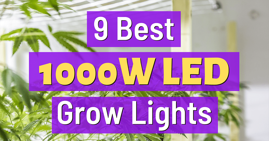 best 1000w led grow light reviews