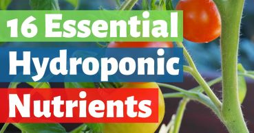 hydroponic nutrients guide