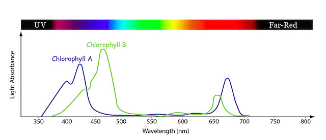 plant absorption light spectrum