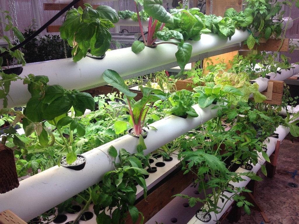 thriving hydroponic garden