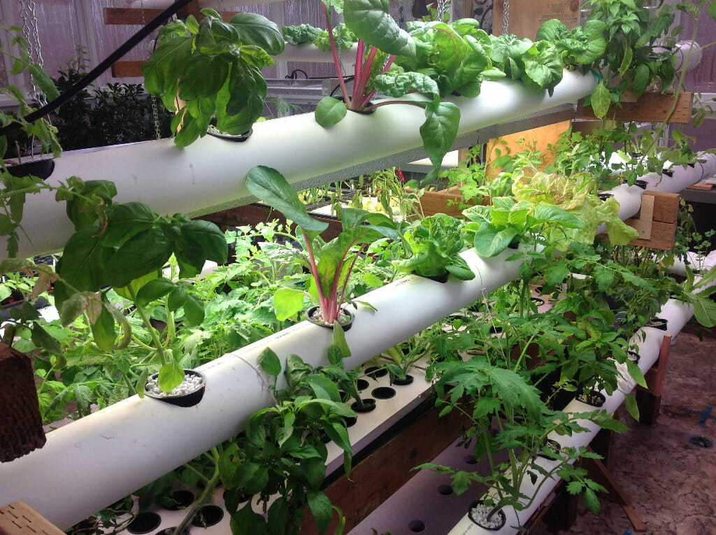 vertical hydroponic system with pvc