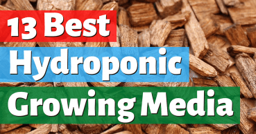 best hydroponic growing media