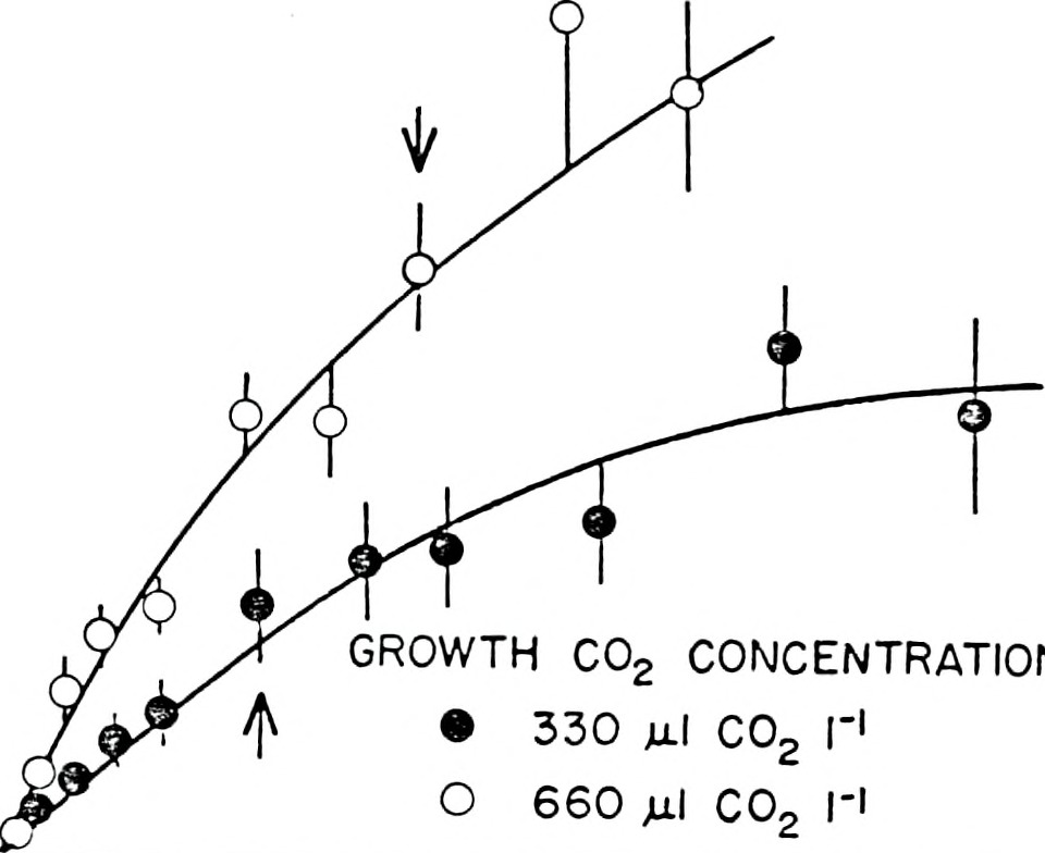 carbon dioxide photosynthesis